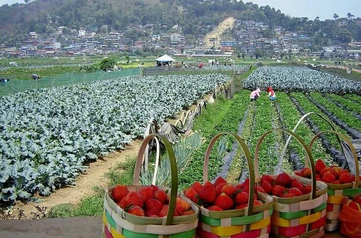 Strawberry Farm in Sagada-Boracay Tour