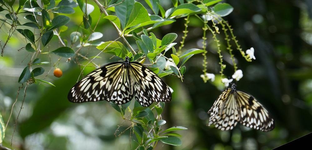 Butterfly Sanctuary in Bohol