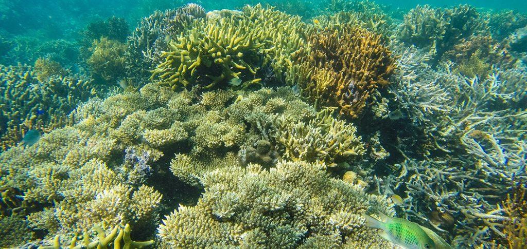 Lusong Coral GArden in Coron