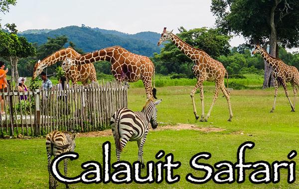 Safari in Coron