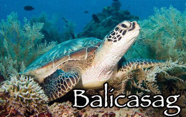 Bohol day tours to Balicasag